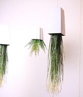 UPSIDE DOWN HANGING PLANTS